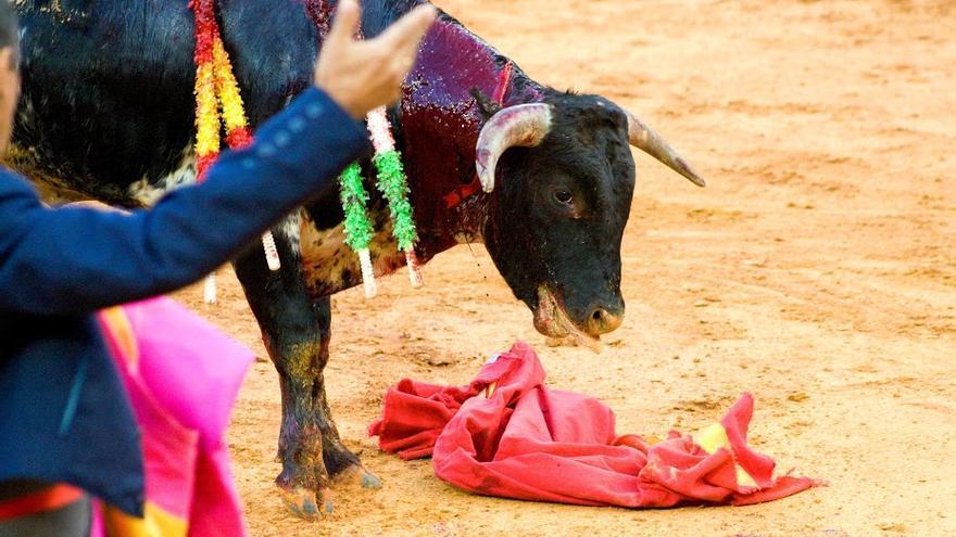 Alumno de tauromaquia ofrece al público el maltrato a un becerro. Foto: AVATMA