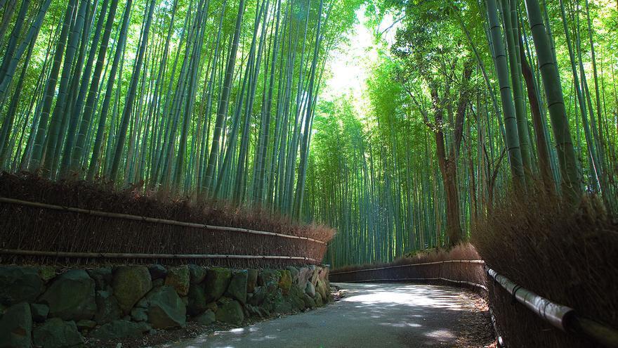 Bosque de bambú de Sagano / Casey Yee vía Flickr (CC)