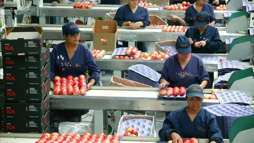 Operarias en una cadena agrícola