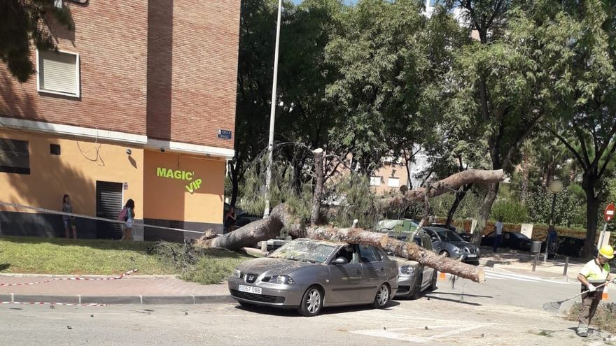 La caída del pino de la calle Sauce no ha producido ningún daño grave