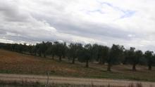 La Junta destina 406.770 euros al desarrollo de proyectos innovadores en el olivar con los Grupos Operativos