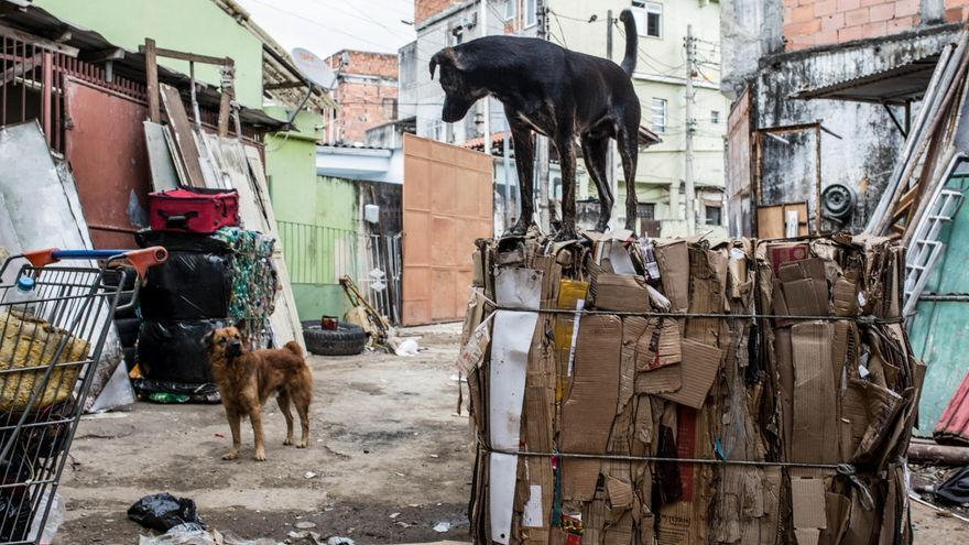 Un perro descansa sobre un fardo de cartones en el depósito de reciclaje de Souza.   Foto: Patricia Taro.