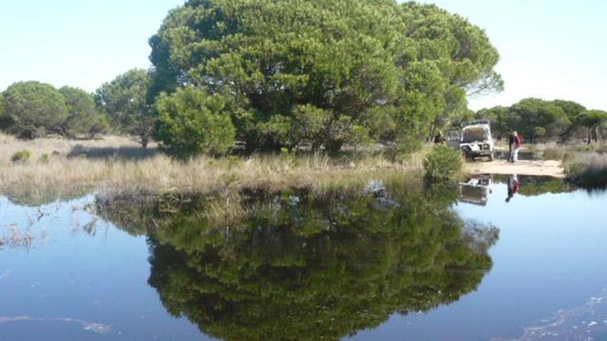 Concentración de agua en el Espacio Natural de Doñana.
