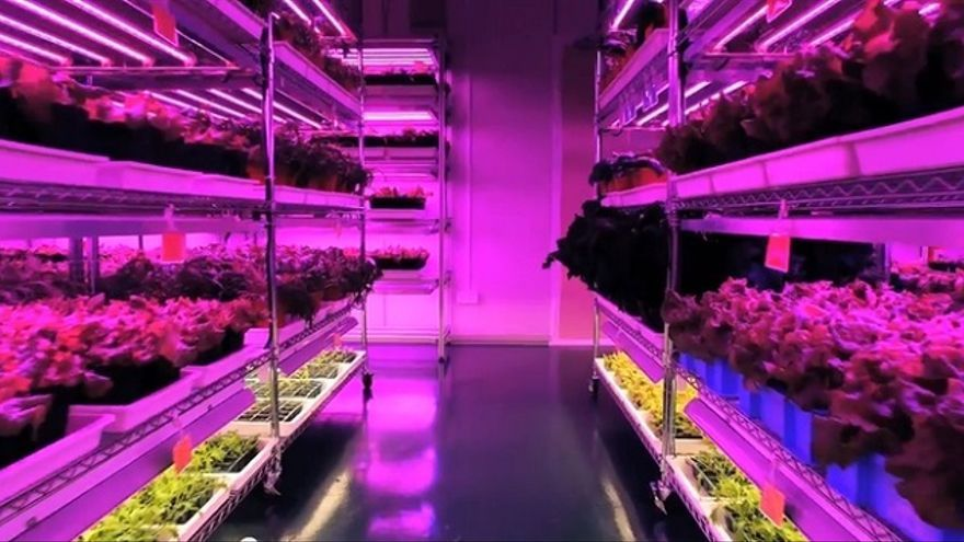 Así cultiva Panasonic diez variedades diferentes de cultivos en su planta de Singapur