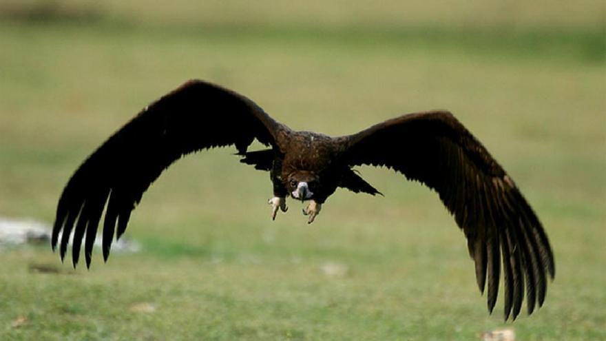 La biodiversidad no sólo depende de la protección del lince y del águila imperial