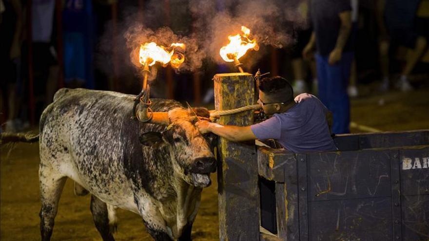 Toro con la cornamenta en llamas en un festejo taurino popular.