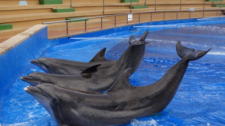 Delfines cautivos y sometidos a duros adiestramientos para el entretenimiento humano. Foto: FAADA