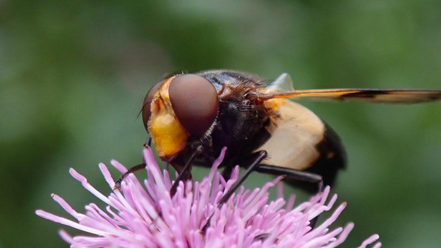 Los investigadores finlandeses no ponen en duda el declive de los insectos.