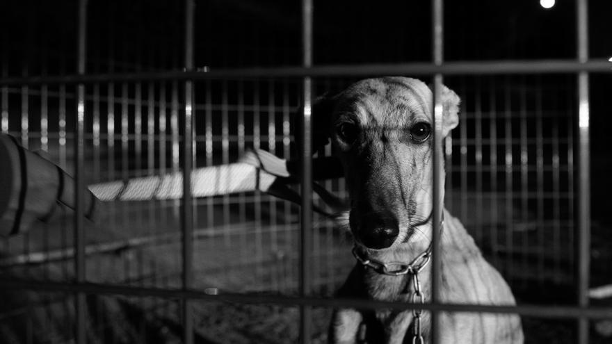 Ilda pudo ser rescatada tras muchos días vagando por una carretera.