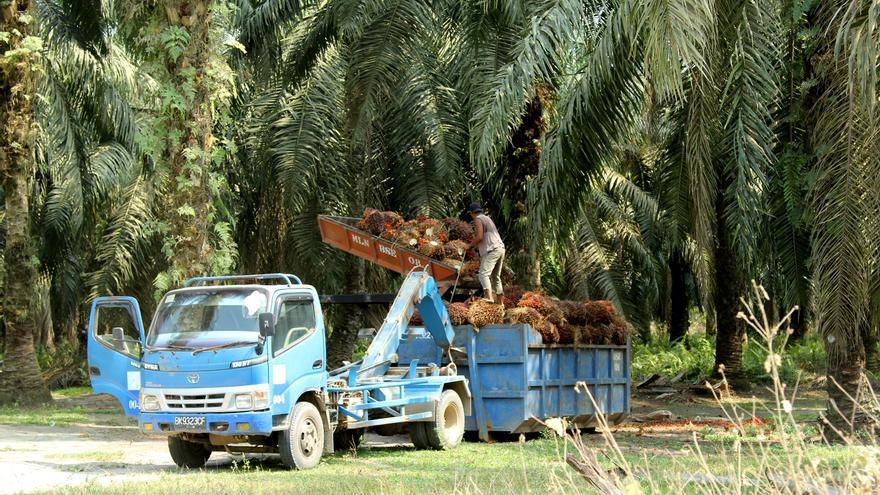 La planta Milano de aceite de palma. | Laura Villadiego