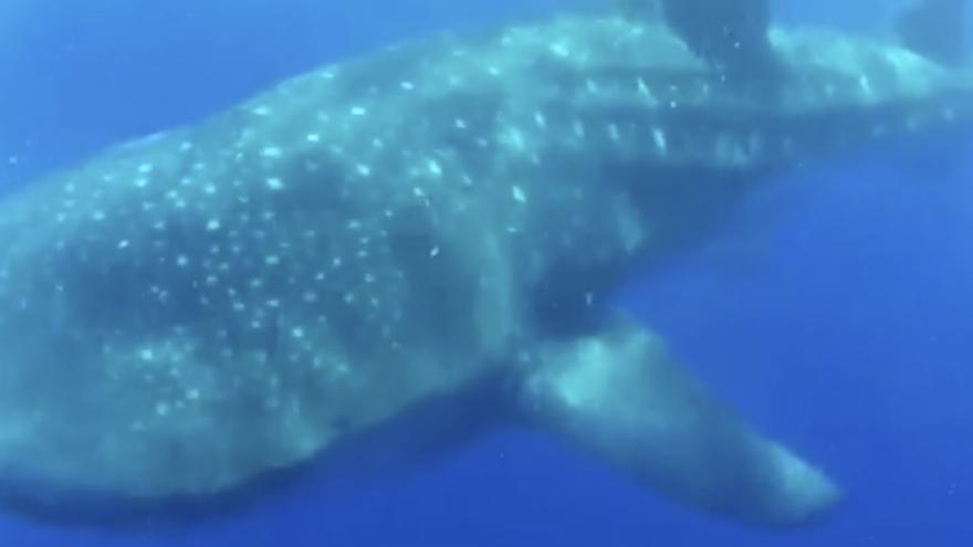 Captura de pantalla del vídeo del 'Fancy II' donde se aprecia el tiburón.