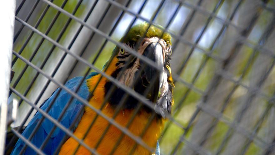La EAZA no da valor intrínseco a la vida individual de los animales, como demuestra la inclusión del 'culling' en sus manuales de gestión