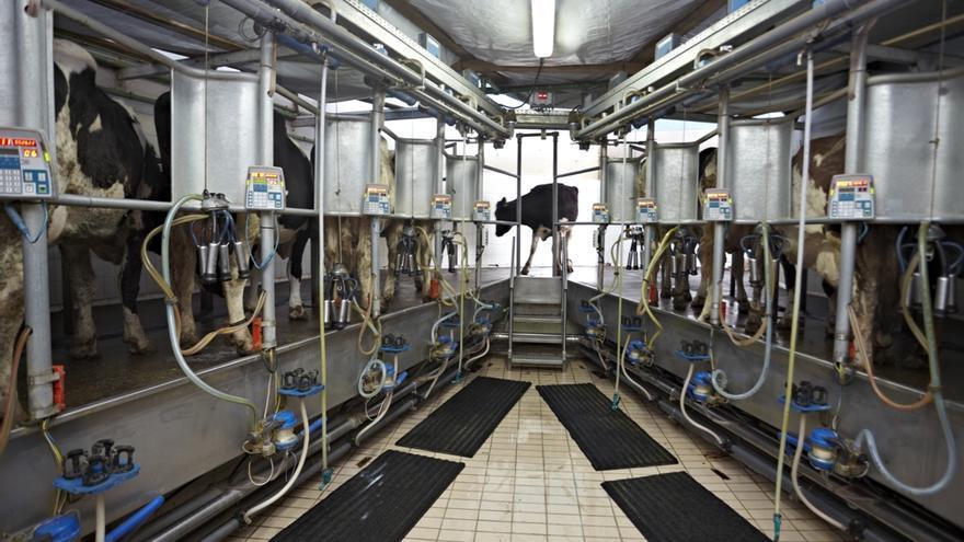 Industria alimentaria vaquería de leche