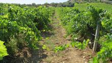 La biodiversidad: una aliada de los espacios agrarios
