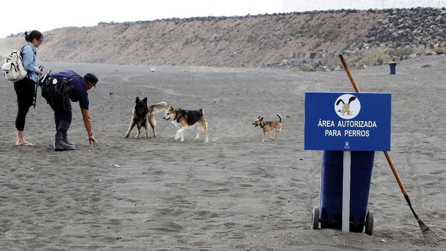 La playa de Bocabarranco, en Gran Canaria, fue el primer espacio pet-friendly de Canarias. EFE