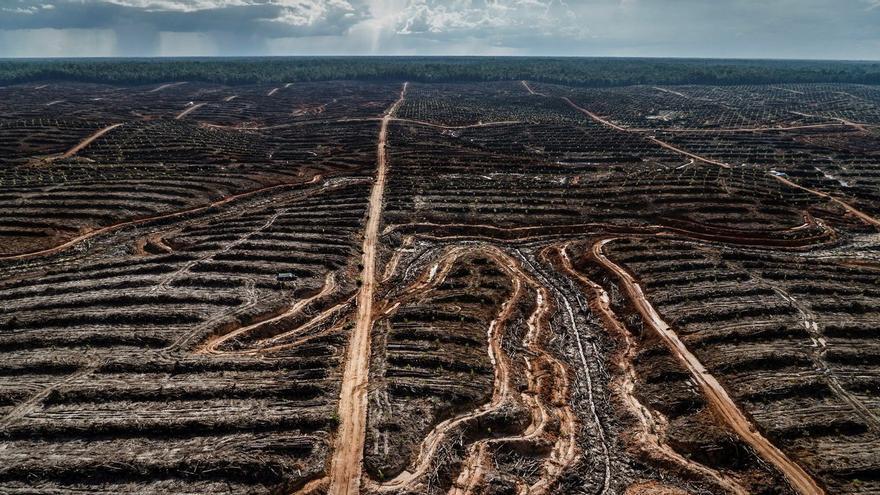 Deforestación para una plantación de producción de aceite de palma en Papua