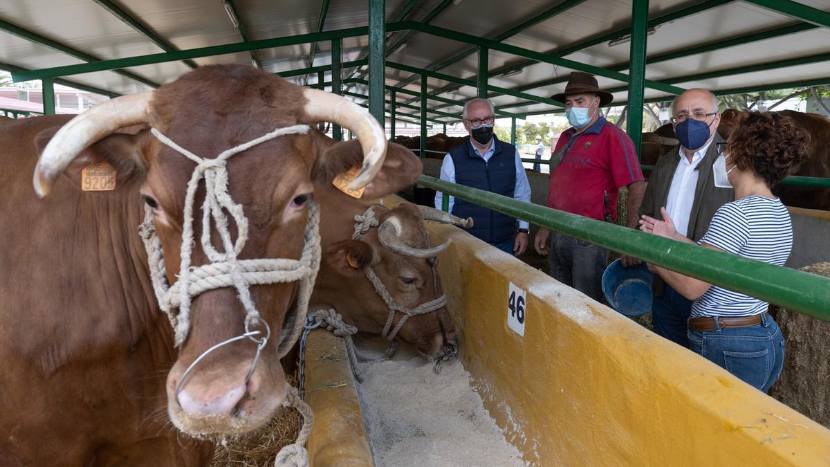 El presidente del Cabildo de Gran Canaria, Antonio Morales, visita la Feria de Ganado