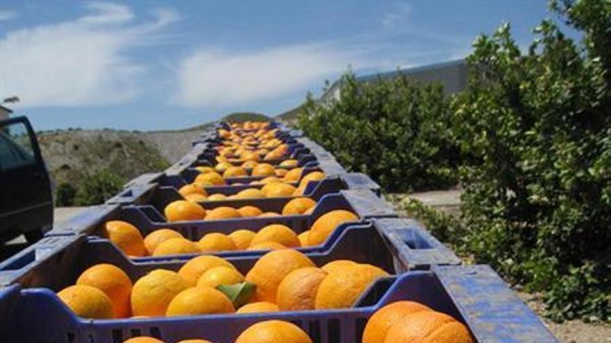 Córdoba producirá más de 290.000 toneladas de cítricos, un 14,2% más que en el período anterior