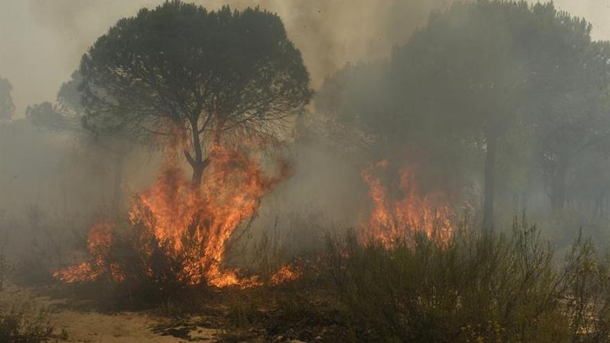 Imagen del incendio que ha llegado al espacio natural de Doñana