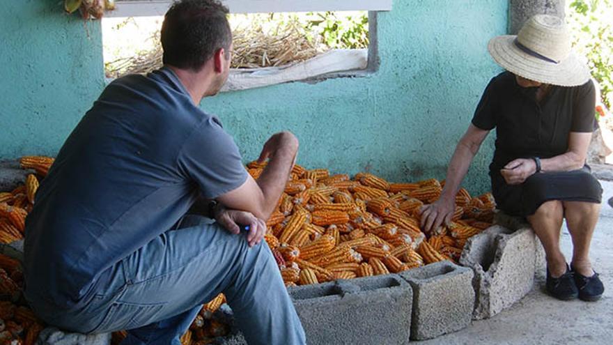 Guardianes de semillas: un investigador conserva en Lanzarote antiguas simientes