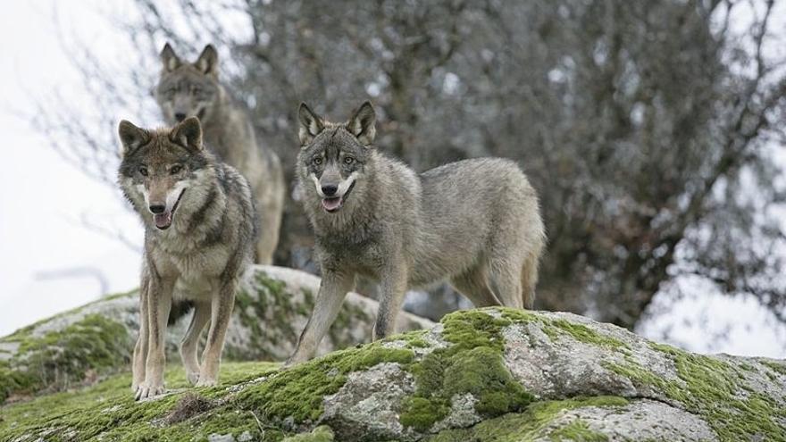 """Oria ve """"falta de respeto"""" que el PP considere un """"fracaso"""" la Mesa del Lobo"""