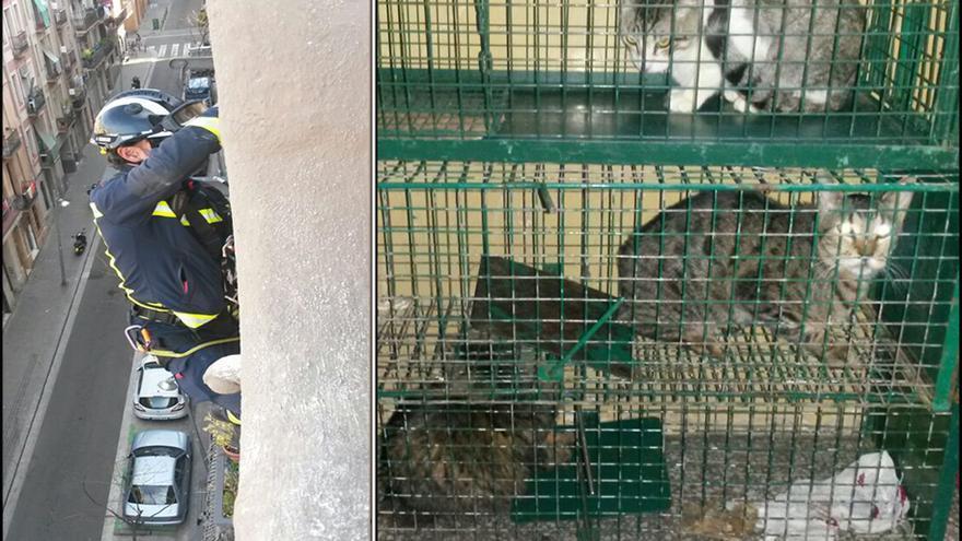 Izquierda: bombero descolgándose por la fachada para rescatar a los gatos. Derecha: los tres gatos rescatados con jaulas trampa. Fotos: Barcelona Gat i Gos