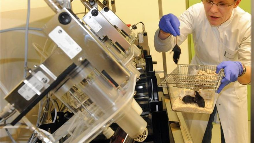 Crean un ratón con síndrome Noonan, lo que abre la vía a futuros tratamientos