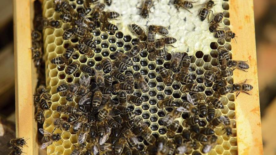Un panal de abejas.