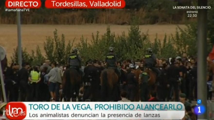 La Guardia Civil vigila la sentada de animalistas durante el Toro de la Vega