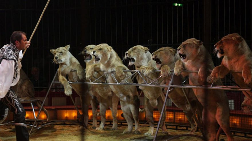 Un domador con un grupo de leones.