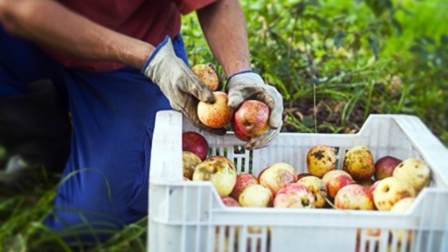 Cambiar la forma de comer ayuda a la sostenibilidad.