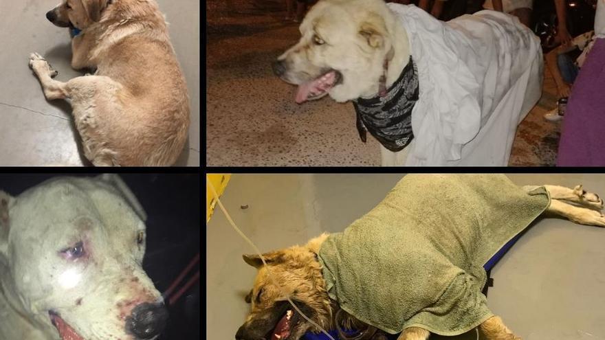 Imágenes cedidas por las protectoras encargadas del rescate de animales en el incendio de Almorox
