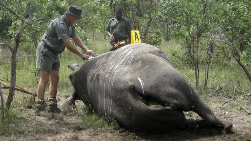 Las autopsias de rinoceronte, arma fundamental para cazar a los furtivos
