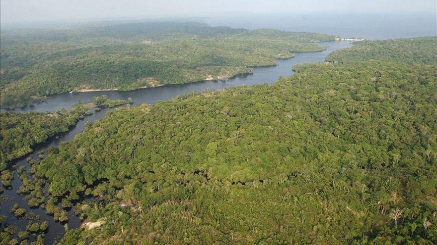 Urge acelerar la lucha contra la deforestación para cumplir los objetivo de la ONU
