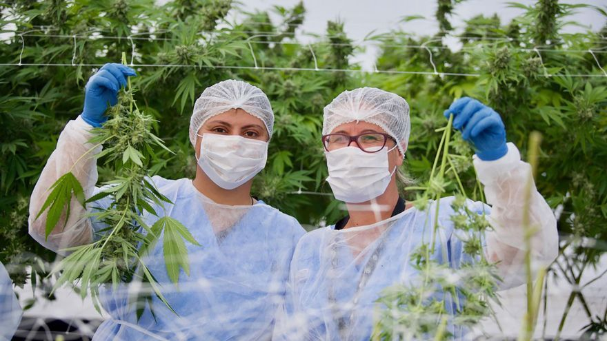 Las propuestas de Los Verdes para los fondos europeos en Canarias: modificar los hoteles, sostenibilidad y legalizar el cannabis
