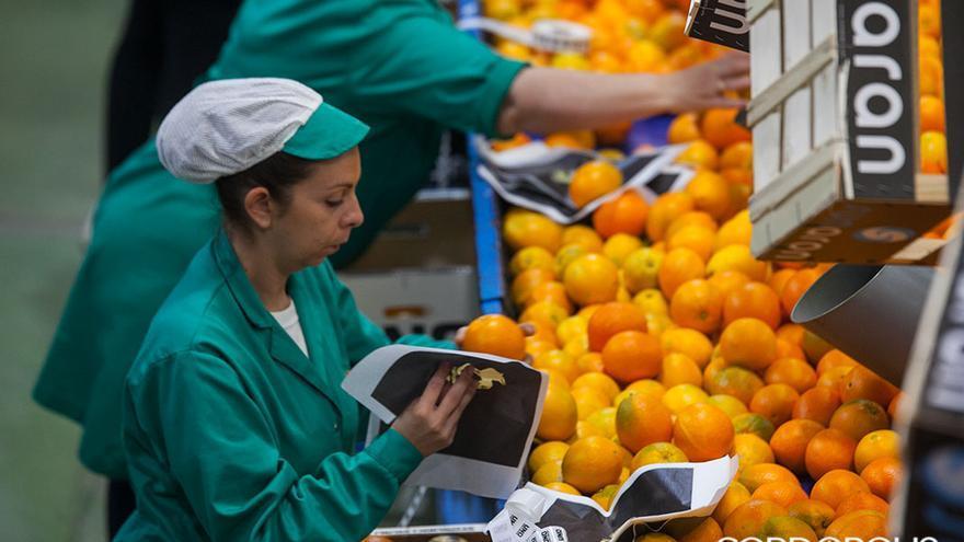 Trabajadoras de la naranja en Palma del Río | MADERO CUBERO