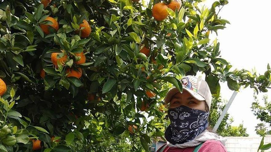 Una trabajadora con una mascarilla para protegerse de los pesticidas en California.