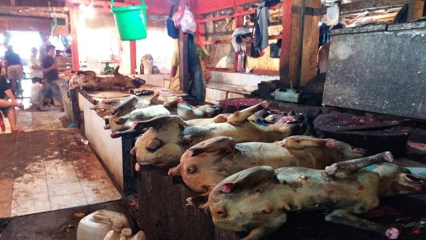 Mercado de carne de perro en Indonesia