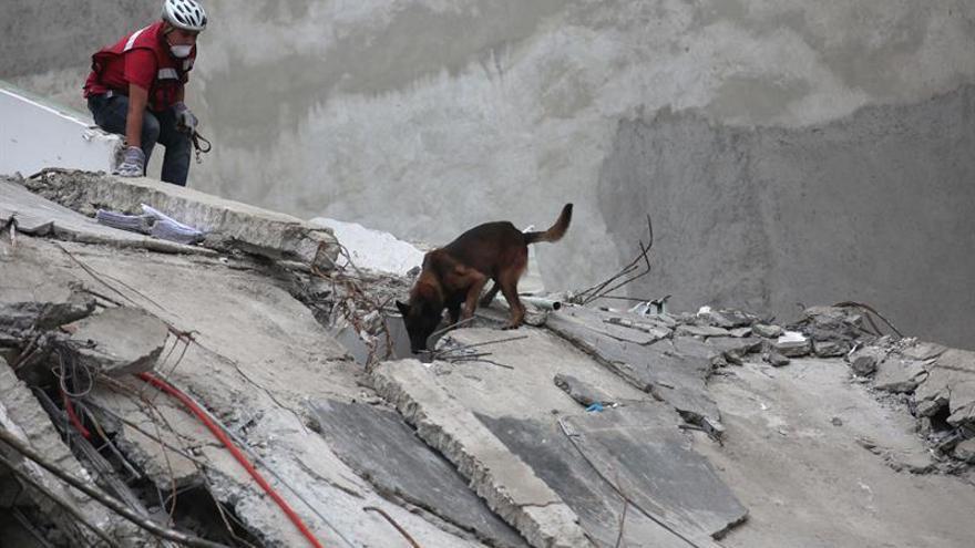 """El instinto de """"Chichí"""" muestra que los milagros existen entre los escombros"""