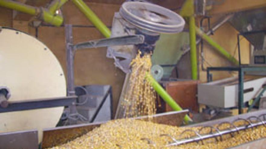 Elaboración del gofio de millo. (CANARIAS AHORA)