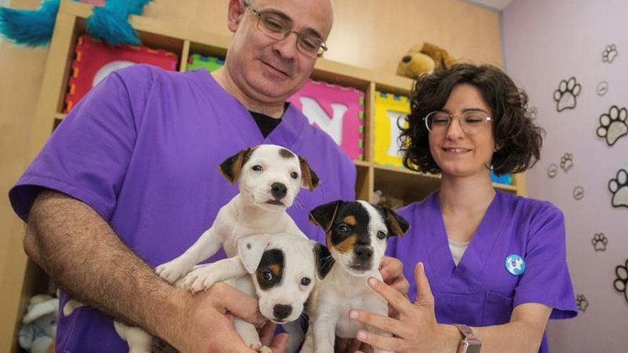 Perros de alerta médica, dulces detectores contra la diabetes y la epilepsia