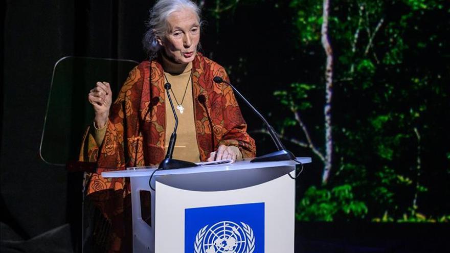 Una exposición de fotos recauda fondos para el Instituto Jane Goodall francés