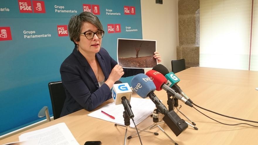 """Patricia Vilán no tiene """"intención"""" de presentarse a las primarias del PSdeG y dice que """"lo importante"""" es el """"proyecto"""""""