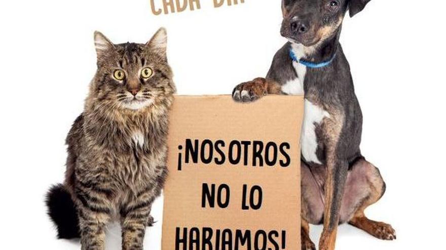 'Calidad de Vida' lanza una nueva campaña de sensibilización contra el abandono de mascotas en verano