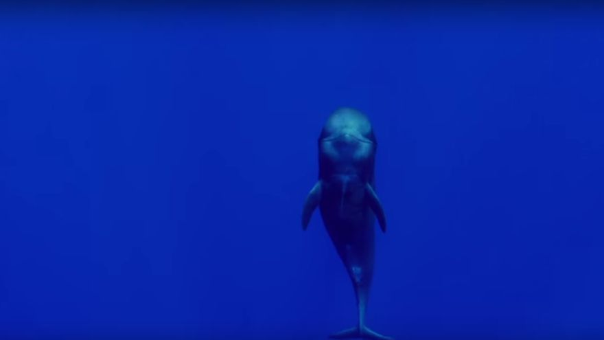 Imagen del audiovisual 'La Palma, Isla Azul'