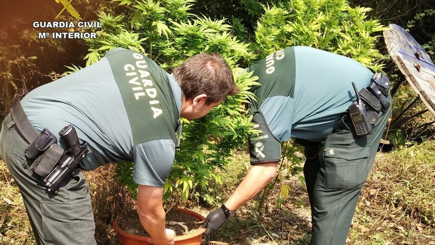 Desmanteladas dos plantaciones de marihuana en Mogro y Silió, y detenidos sus propietarios