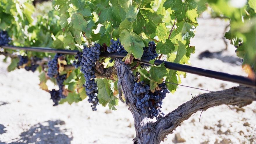 Labastida acoge el domingo un encuentro de pintura para promocionar el 'paisaje del vino' de Rioja y Rioja alavesa