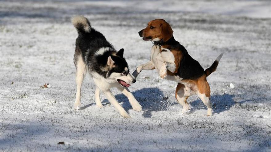 La vacuna española contra la leishmaniosis canina se distribuye ya en Europa