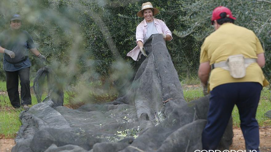 Dos jornaleras trabajan en un olivar | MADERO CUBERO