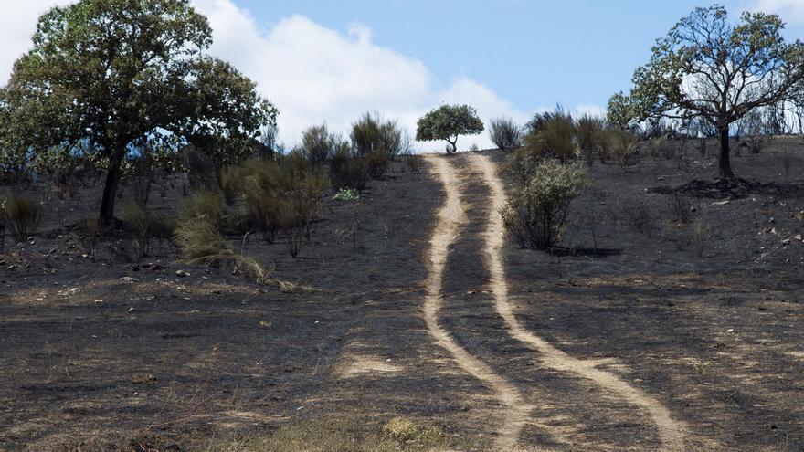 Estabilizado el incendio de Zamora, el de mayor extensión del verano